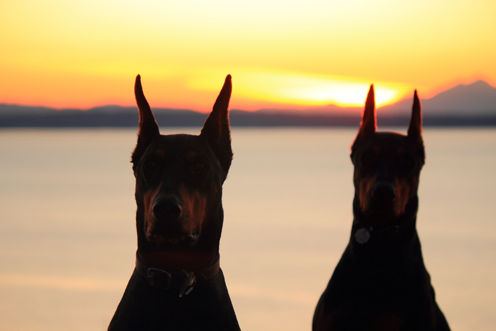 Name:  Dogs sunset.JPG Views: 502 Size:  335.8 KB
