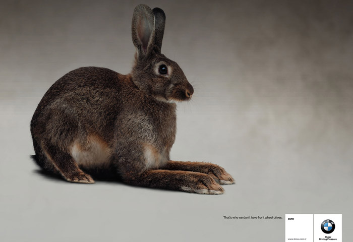 Name:  bmwrabbit-small.jpg